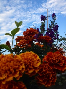 deck flowerssky